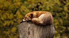 Kokį poveikį mums daro prasta miego kokybė?